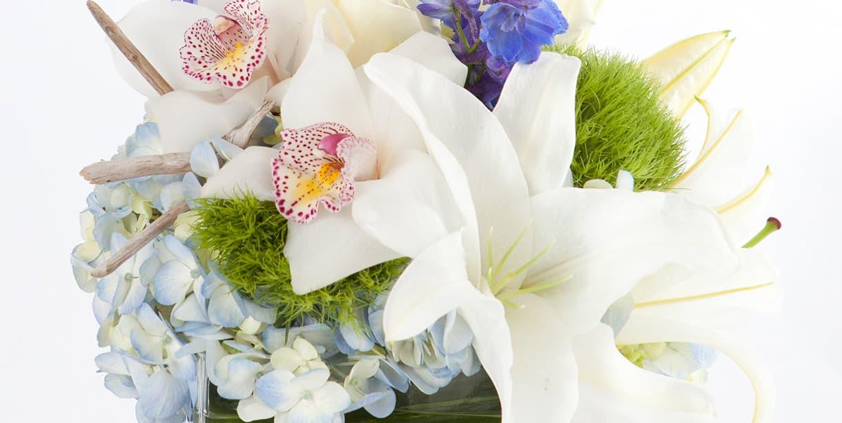 Cape Shore flowers
